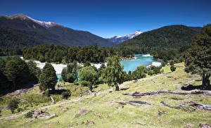 Fotos Chile Gebirge Wald Fluss Bäume Patagonia