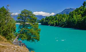 Fotos Chile Flusse Gebirge Bäume Patagonia Natur