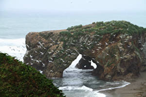 Sfondi desktop La costa Uccello Gabbiani Molti Russia Il dirupo Sakhalin island, Okhotsk Natura