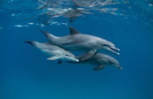 Fotos Delfine Unterwasserwelt Drei 3 Tiere