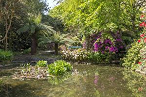 Fotos England Garten Rhododendren Teich Strauch Palmen Trengwainton Garden Natur