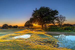 Image England Sunrises and sunsets Parks Water Trees Grass New Forest Water Park Nature