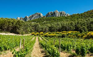Hintergrundbilder Frankreich Wälder Acker Weinberg Felsen Strauch Provence