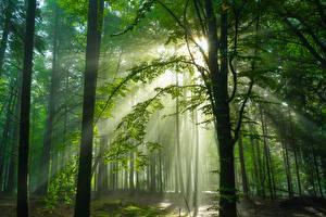 Bilder Deutschland Wälder Bäume Lichtstrahl Schwarzwald Natur