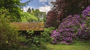 Hintergrundbilder Deutschland Parks Gebäude Rhododendren Strauch Seyfriedsberg Castle park Natur
