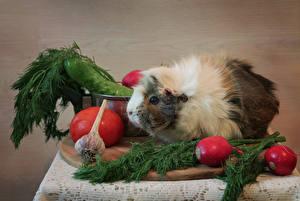 Hintergrundbilder Hausmeerschweinchen Gemüse Dill Radieschen Knoblauch Tiere