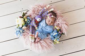 デスクトップの壁紙、、ノウサギ、バラ、アジサイ、玩具、木の板、赤ちゃん、眠る、子供