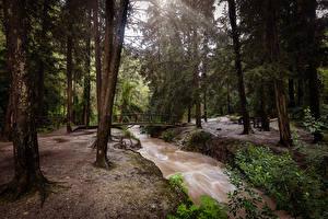 Hintergrundbilder Israel Parks Fluss Brücken Bäume Northern Natur