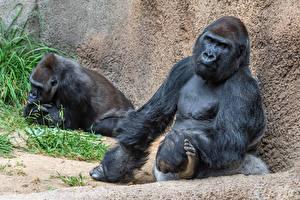 Images Monkey Sitting Two Animals