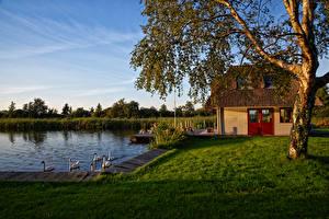 Hintergrundbilder Niederlande Gebäude Teich Entenvögel Bäume Gras Utrecht Natur