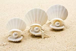 Fotos Perlen Muscheln Sand Drei 3