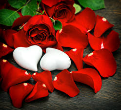 Bilder Rose Rot Kronblätter Herz 2 Blüte