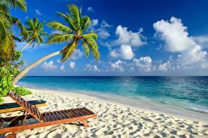 Bilder Meer Tropen Palmen Strände Sonnenliege Natur
