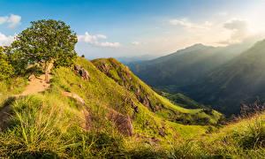 Bilder Sri Lanka Gebirge Bäume