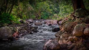 Desktop hintergrundbilder Steine Wald Hawaii Bäche HDR Iao Valley West Maui Natur
