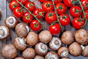 Bilder Tomate Pilze Zucht-Champignon