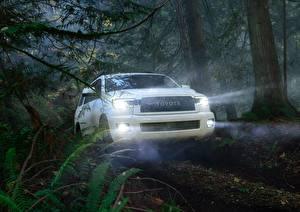 Bilder Toyota Wald Weiß Lichtstrahl Sequoia TRD Pro Autos