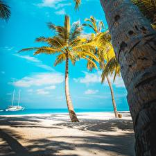 Fotos Tropen Meer Strand Palmengewächse Baumstamm Natur