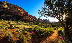 Bilder USA Bäume Strauch Lichtstrahl Weg Felsen Arizona Natur