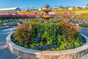 Fotos USA Parks Springbrunnen Petunien Kalifornien Strauch Carlsbad Natur