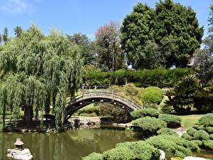 Images USA Parks Pond Bridges California Los Angeles Bush Trees Botanical Gardens San Marino Nature