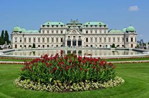 桌面壁纸,,維也納,奥地利,公园,宮殿,草,Belvedere,城市