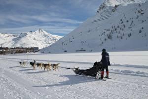 Fotos Winter Berg Hunde Schnee Schlitten Lauf Schatten ein Tier