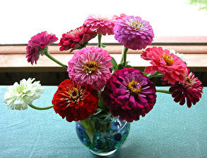 Bilder Zinnien Vase Mehrfarbige