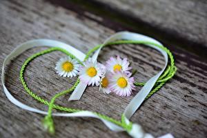 Fotos Gänseblümchen Valentinstag Band Herz