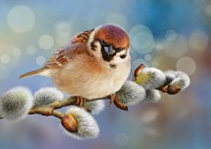 Pictures Birds Sparrow Closeup Painting Art Branches verba animal