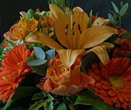 Pictures Bouquet Rose Gerbera Lilium Orange Flowers