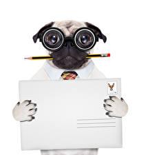 Hintergrundbilder Originelle Hund Mops (Hunderasse) Bleistift Brille Weißer hintergrund Vorlage Grußkarte Komische ein Tier