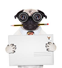 Images Creative Dog Pug Pencils Glasses White background Template greeting card Funny animal