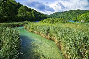 Bilder Kroatien Parks See Wald Gras Plitvice Lakes National Park Natur
