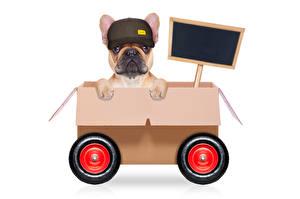 Fotos & Bilder Hunde Kreativ Weißer hintergrund Bulldogge Baseballcap Schachtel Tiere