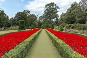 Pictures England Gardens Design Shrubs Trees Cliveden Garden Nature