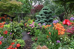 桌面壁纸,,英格兰,庭園,杜鵑花屬,罌粟,设计,灌木,Walsall Garden,大自然