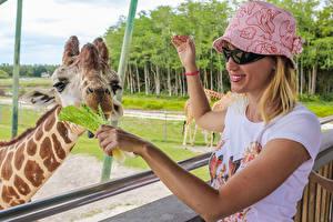 Fotos Giraffe Blondine Brille Lächeln Hand Der Hut Kopf Tiere