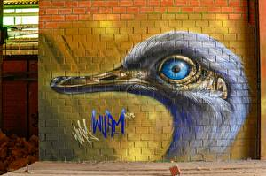 Picture Graffiti Bird Wall Made of bricks Head