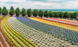 Fotos Japan Felder Design Bäume Khokkajdo Natur