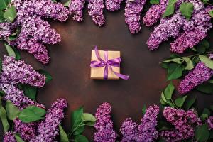 Desktop hintergrundbilder Syringa Geschenke Violett Blumen