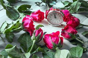 Bilder Rose Uhr Rot Blüte