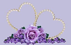 Fotos Rosen Valentinstag Perlen Farbigen hintergrund Herz