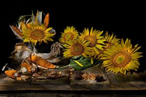 Fotos Sonnenblumen Kukuruz Stillleben Bretter Blüte