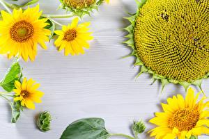 Fonds d'écran Tournesols Madrier fleur
