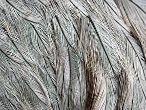 Photo Texture Feathers Closeup