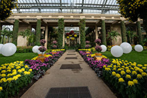 Fonds d'écran USA Jardins Chrysanthemum Design Boules Longwood Gardens Nature