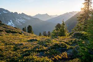 Desktop hintergrundbilder USA Gebirge Gras Fichten Lichtstrahl Glacier Peak Wilderness Natur