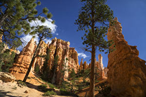 Photo USA Parks Crag Trees Spruce Bryce Canyon National Park Nature