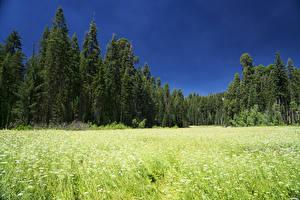 Desktop hintergrundbilder Vereinigte Staaten Parks Wälder Acker Sequoia National Park Natur